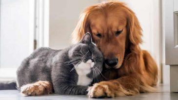 Лучшие домашние животныее